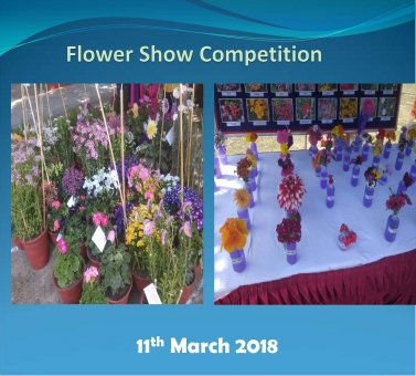Flower Competition